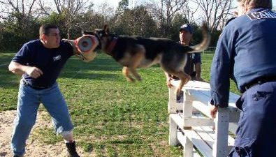 Training Protection dogs at PSD Kennels Poplarville Ms